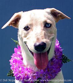 Two eye colored dog in Hawaii