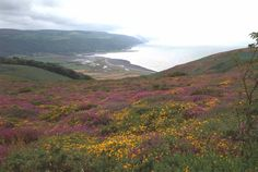 Porlock Bay from Hurlestone Point. West Somerset