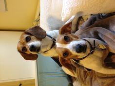 Lucy and Peanut (or the Flying Beagle)