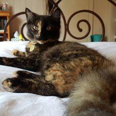 Relaxing on easter monday #catsofinstagram #cats #kitten #tiger #roar #crazycatlady #green #beautiful #catlife #instadaily #caturday #instacat #ragdoll X #persian #gold #eyes #kittycat #hippie #catsoninstagram #kittensoninstagram #tortoiseshell #tortie #pet #petoftheday #pets #catsagram #catstagram by willow_the_weirdo
