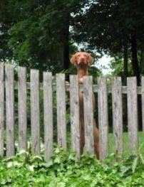 Pin On Dog Fence