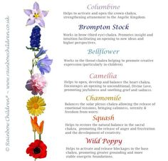 Flower essences for the chakras.