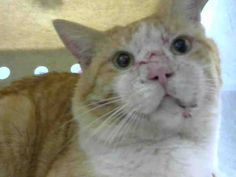 www.PetHarbor.com pet:MRVL.A445976                 RIP sweet precious boy,I'm so sorry humans failed you but know that you are loved.<3