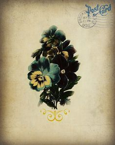 Victoriennes pensées bleues Sarcelles botaniques. par ShabbyPeonie