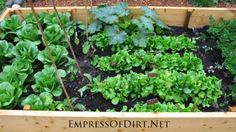 Edible Front Gardens - How I came out as a front yard veggie grower - empressofdirt.net