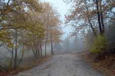 Fall wall home decor travel photo print autumn fog in the