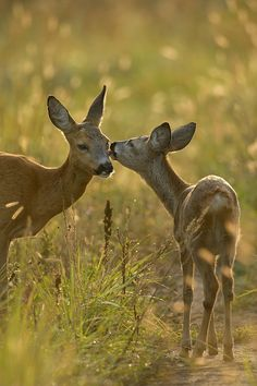 Mother deer & her fawn