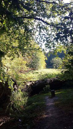 Wunderbare Farben der Buchenwälder Rügens im Herbst | sonniger Herbst am Herthasee im Nationalpark Jasmund (c) Frank Koebsch (1)