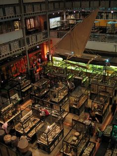 Pitt Rivers Museum, Oxford, England  Photograph by Michael Reeve