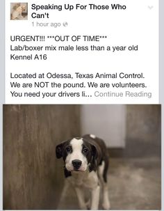 Outta time. C'ing dogs at Odessa shelter always breaks my heart. https://www.facebook.com/speakingupforthosewhocant/posts/744056938951880:0 … pic.twitter.com/Zo9pKevOnp