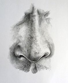 How to Draw a Nose - Finished Result