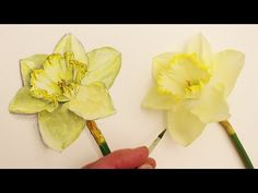 How to Draw Daffodil Flowers: Realism Challenge #3