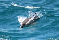 PLAYFUL DOLPHINS IN HERVEY BAY by Sixteenth Man on 500px