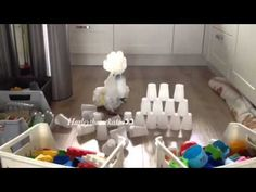 Harley The Cockatoo - Destroy The Cup Tower : Video Clips From The Coolest One Bird Toys, Cute Birds, Cockatoo, Cute Gif, Baby Dogs, Funny Animals, Cool Stuff, Parrots