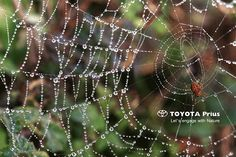 TOYOTA/ Advertising Campaign on Behance the spider net ad