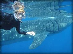 Tour company - really good reviews. Whale sharks, snorkeling, canoeing, Sian K'an Biosphere