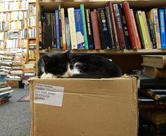 voltaire and rousseau cat asleep by biotron, via Flickr