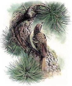 Птички - Схемы вышивки - lucifera - Авторы - Портал «Вышивка крестом»