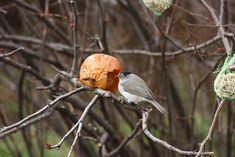 Téli madáretetés | Magyar Madártani és Természetvédelmi Egyesület Parrot, Bird, Animals, Parrot Bird, Animales, Animaux, Birds, Animal, Animais