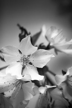 Flowers - Black and White Photography (Schwarz-Weiß-Fotografie) - © Tim Münnig