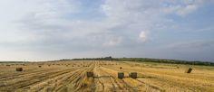 Slovakian fields