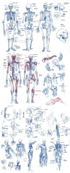 Male Figure Drawing, Figure Drawing Reference, Anatomy Reference, Art Reference Poses, Figure Drawing Practice, Anatomy Sketches, Drawing Sketches, Art Drawings, Life Drawing