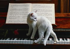 Cat-music-BLOG-500 #cats #love #cute #awesome #CardeApp