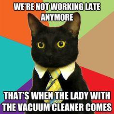 Business cat on overtime - Imgur