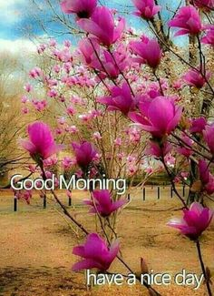 Good Morning Sunday Images, Good Morning Picture, Good Morning Flowers, Good Morning Good Night, Good Morning Quotes, Good Day, Good Night I Love You, Morning Blessings, Pictures