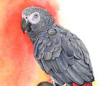 Parrot print of watercolor painting GP2415 - A4 size print