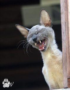 funny animal   Flickr - Photo Sharing!