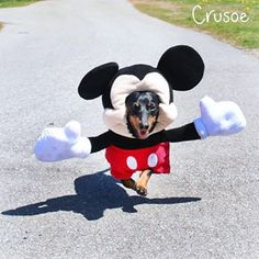 E se precisar, você pode largar tudo para ir trabalhar na Disney. | 15 cachorros que cansaram de ser salsichas