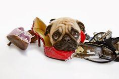 Köpeklerde Davranışı Yeniden Yönlendirmek