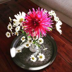 Freitagsblumen - die erste Dahlienblüte