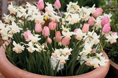 """Do this in the fall. Spring bulbs in Pots : store the potted bulbs in an unheated garage or storage room. You'll need to water every few weeks since the pots won't have access to rainfall. In addition to small pots, pack bulbs """"shoulder-to-shoulder"""" in big containers for an abundant display in spring. Toss aside the spacing recommendations so you can get as many bulbs into the container that will fit. I love this!"""