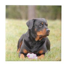 #Rottweiler Tile - #rottweiler #puppy #rottweilers #dog #dogs #pet #pets #cute