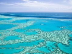 Great Barrier Reef..hoping to snorkle here within the next couple years.