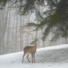 ...the stillness of winter and life