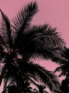 size: 16x12in Art Print: Pink Sky Palms by Amanda Abel : Transform your home into your own curated gallery space with this stunning print. Weave it into a complementary color scheme or feature it in a clean, open space for a distinct statement. Made for the art lover in you.231 GSM