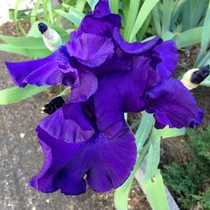 depth and intensity in purple