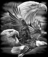 """-"""" la pordiosera caminaba medio desmayada medio muerta de dolor ....y se decia a cada paso cosas que solo ella entendia ...el dolor era tan grande y la injusticia tan pesada que sus pies ensangrentados de tanto caminar le laceraban de dolor....las aguilas la seguian de cerca para que cuando cayera pudieran levantarla y llevarla hasta lo mas alto de su reino ......""""- Beautiful Birds, Animals Beautiful, Cute Animals, Bald Eagle Tattoos, Adler Tattoo, Eagle Drawing, Eagle Pictures, Harley Davidson Art, Eagle Art"""