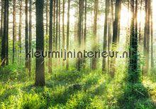 Sunset in the woods fotobehang 00964 Bossen Ideal Decor
