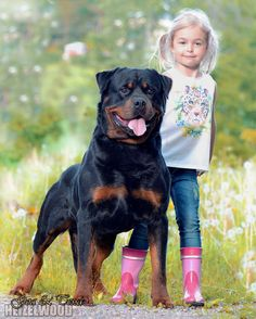 #Rottweiler with girl
