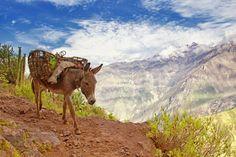 Uno de los cañones más bellos del mundo   Cañón del Colca, Perú