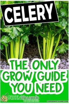 Growing celery is one of the vegetables that are grown in cooler weather. You can easily grow celery from seed in your vegetable garden. You grow celery in containers or indoors if you want. The celery growing tips that you will discover will make it easy Organic Vegetables, Growing Vegetables, Planting Vegetables, Organic Fruit, Garden Pests, Garden Tools, Box Garden, Garden Ideas, Garden Insects