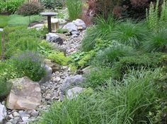 Wonderful Evergreen Grasses Landscaping Ideas 105