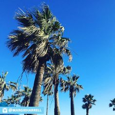 Wish you could sit under the breeze of palm trees? For 15,000 points, redeem a free night at a Wyndham Rewards hotel, including Hotel Galvez! http://bddy.me/1si9zg2