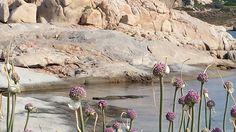 fioritura in scogliera