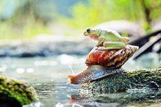 Perereca se valendo do que a natureza oferece!