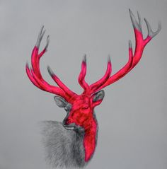 Fine Art Greeting Card Wild One stag by louisemcnaught on Etsy